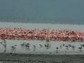 Lake Nakuru met park en omgeving
