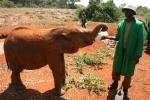 Voeren van een olifant