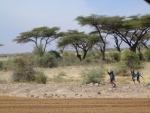 Komt veel voor in Kenia