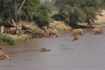 Olifanten op stap