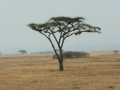 National Park Serengeti